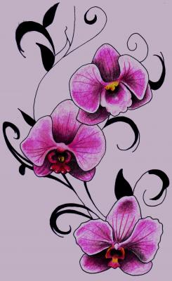 Drawings megan sewell - Dessin d orchidee ...